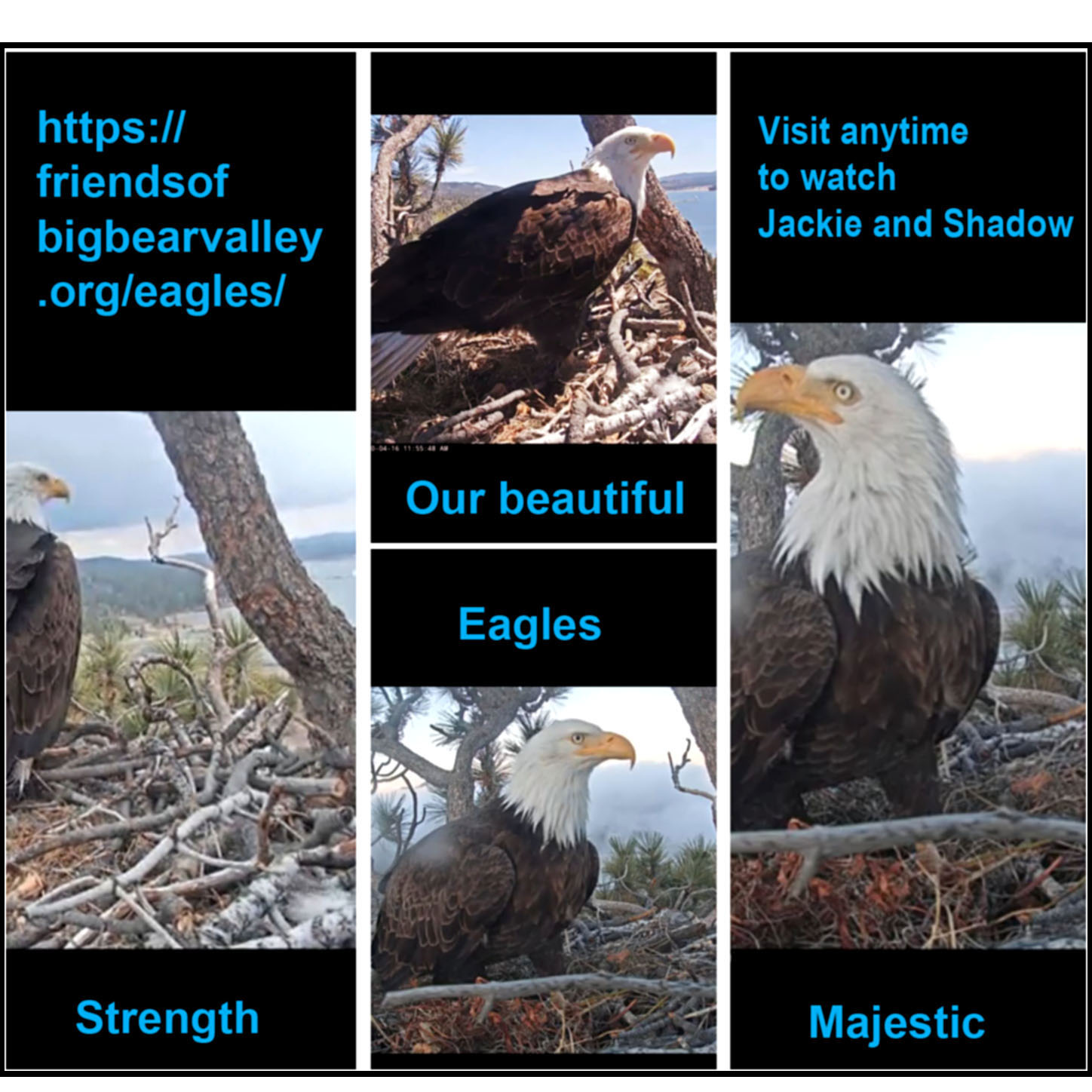 Cindy's Eagles